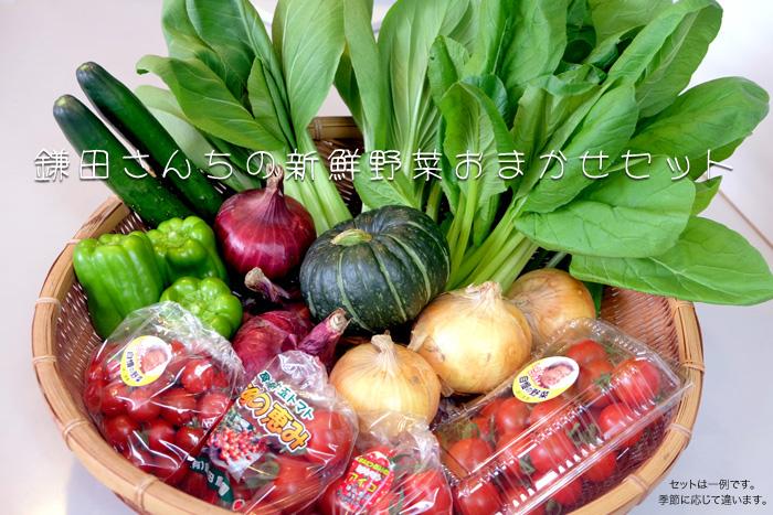 鎌田さんちの新鮮野菜おまかせセット