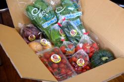 鎌田さんちの新鮮野菜おまかせセット梱包例